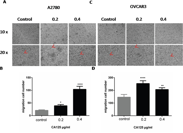 CA125 increases ovarian cancer cell migration.