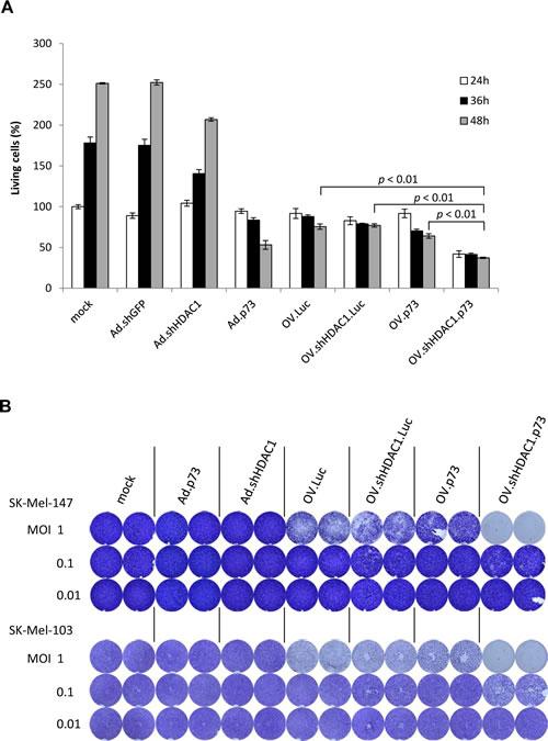 Cytotoxicity of OVs.