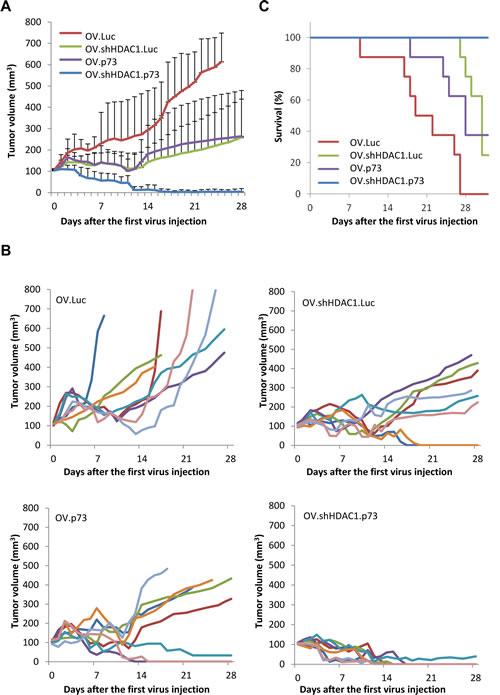 OV.shHDAC1.p73 shows improved anti-tumoral activity compared to control virus.