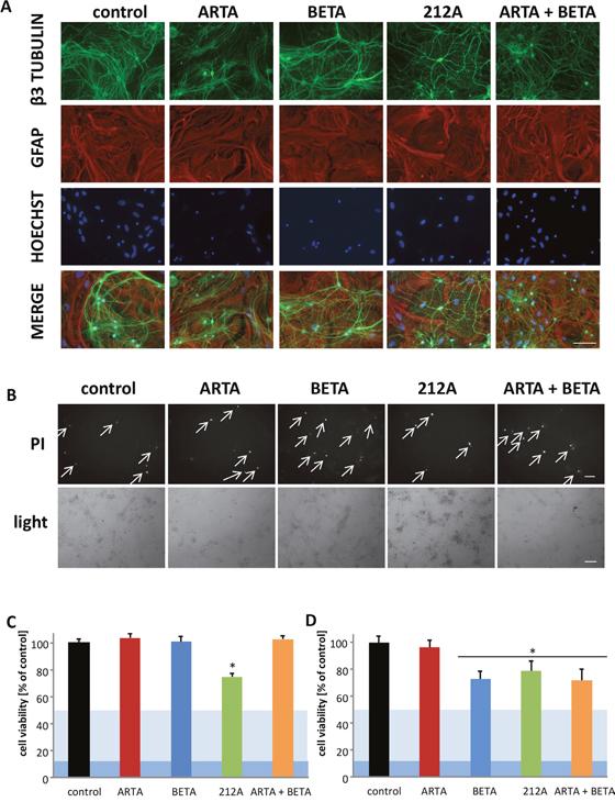 Neurotoxicity and gliomatoxicity profiling of Artesunic acid, Betulinic acid and the hybrid 212A.