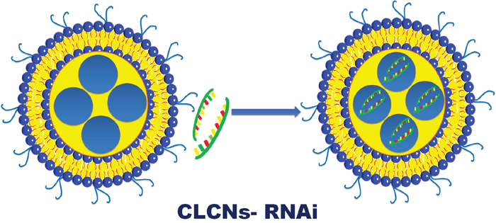 Schematic representation of CLCNs- RNAi binding.
