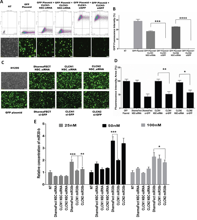 CLCNs RNAi mediated gene-silencing and gene-expression evaluation.