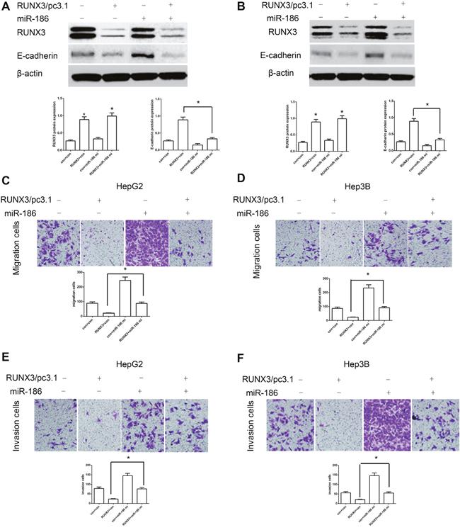 MiR-186 mimics abrogated RUNX3-mediated E-cadherin upregulation and HCC metastasis inhibition.