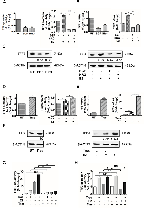 Activation of HER2 decreased TFF3 expression, while inhibition of HER2 increased TFF3 expression in BT474 cells partially in an ERα-independent manner.