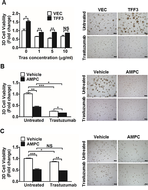 Forced expression of TFF3 increased, whereas AMPC inhibition of TFF3 decreased 3D Matrigel growth of HER2+/ER+ breast cancer cells in the presence of trastuzumab.