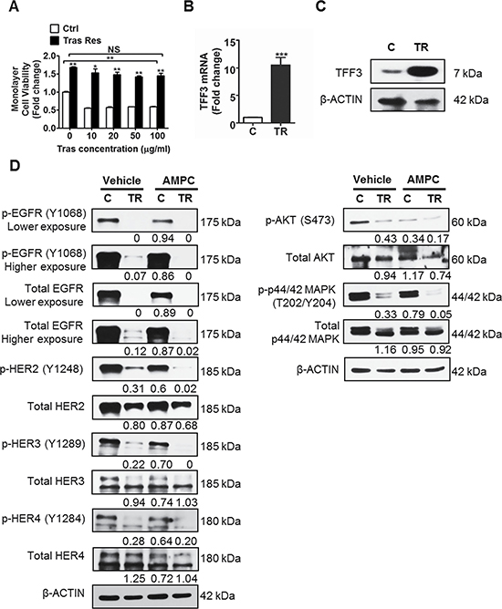 TFF3 is highly upregulated, while HER signalling is markedly decreased in trastuzumab resistant BT474 cells as compared to control cells.