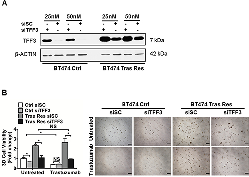 Depleted expression of TFF3 decreased 3D Matrigel growth of trastuzumab resistant BT474 cells, without re-sensitization to trastuzumab.