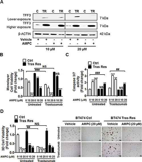 AMPC inhibition of TFF3 decreased monolayer cell viability, increased apoptosis and decreased 3D Matrigel growth of trastuzumab resistant BT474 cells, without re-sensitization to trastuzumab.