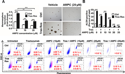 Trastuzumab resistant BT474 cells exhibited higher cancer stem cell-like behavior that was abrogated by AMPC inhibition of TFF3.
