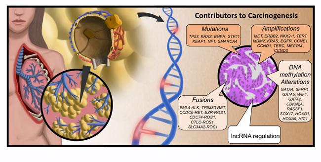 Molecular origins of LUAD.