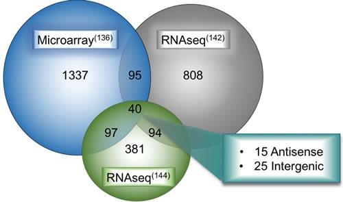 Overlap of deregulated lncRNAs in LUAD between multiple large-scale bioinformatic studies.