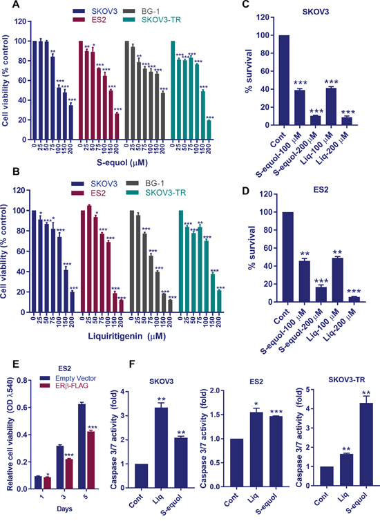 ERβ agonists reduce OCa cell viability, survival and promote apoptosis in vitro.