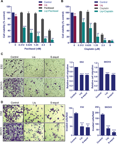 ERβ agonists sensitize OCa cells to paclitaxel and cisplatin treatment and reduce migration and invasion of OCa cells.