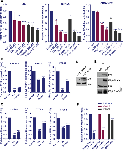 ERβ agonists attenuate NF-κB pathway activation.