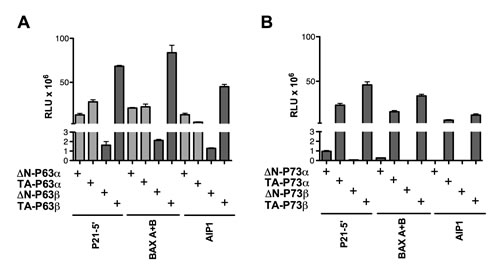 ∆N- and TA isoforms of P63β as well as P73α or P73β isoforms do not exhibit transactivation specificity in yeast.