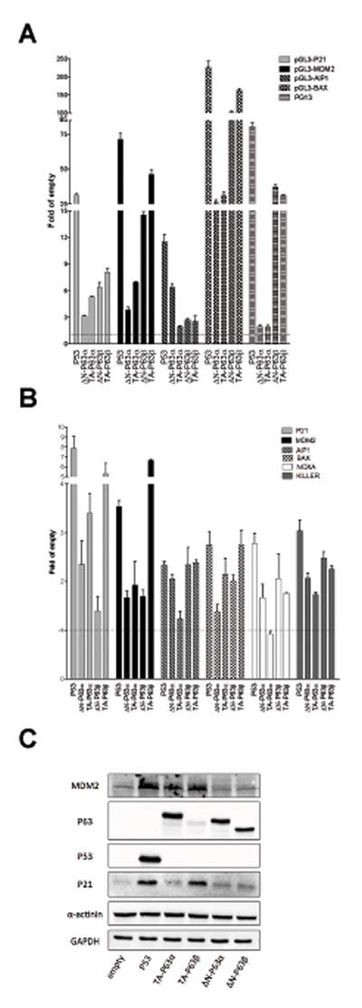∆N- and TA-P63α isoforms exhibit some differences in transactivation specificity in HCT116 P53