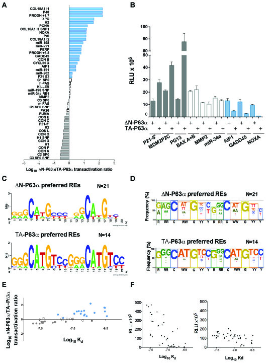 ∆N-P63α and TA-P63α exhibit differences in transactivation capacity and specificity.