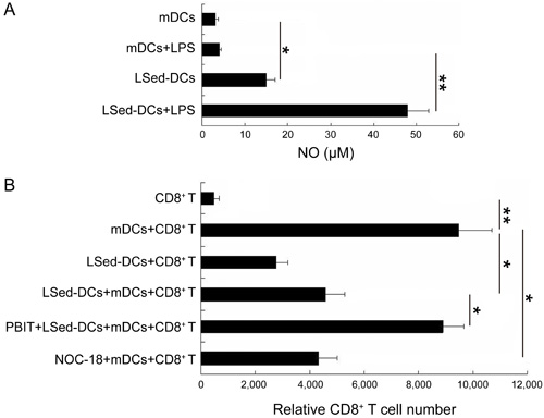 The role of NO in LSed-DC-mediated CD8