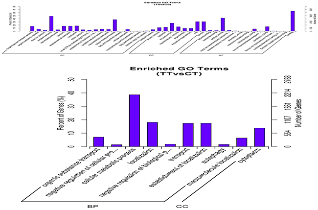 GO term of differentially expressed genes in bovine endometrial epithelial cells treated with IFN-τ.