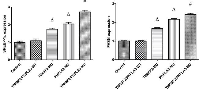 Effects of the TM6SF2 E167K and PNPLA3 I148M variants on SREBP-1c and FASN mRNA expression levels.