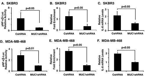 Silencing MUC1-C in SKBR3 and MDA-MB-468 cells suppresses IL-8 expression.