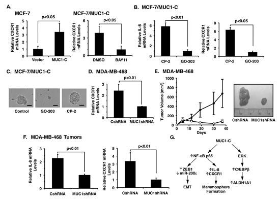 Targeting MUC1-C downregulates IL-8 and CXCR1 expression and blocks tumorigenicity.
