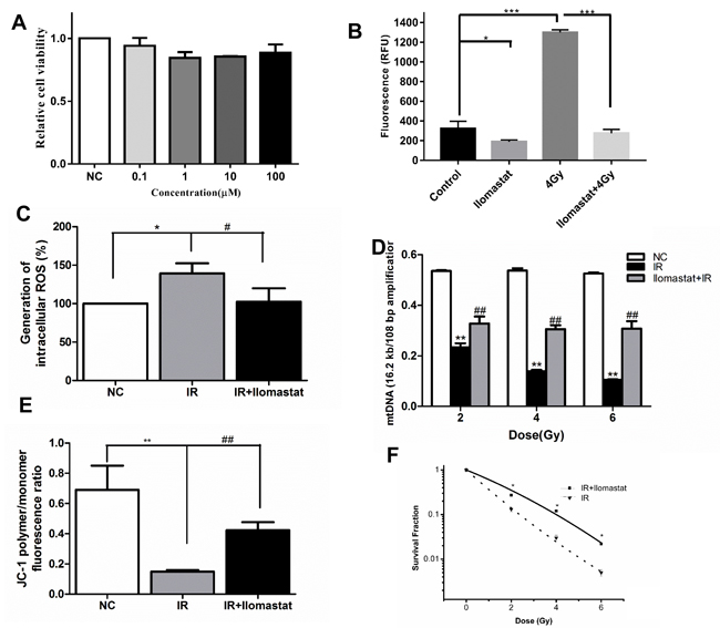 Ilomastat pretreatment reduced radiation induced MMPs activity in A549 cells and the mitochondrial dysfunction.