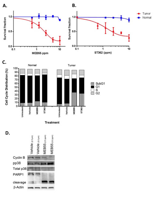 Enhanced sensitivity of primary prostate cancer cells to MEB55 and ST362.