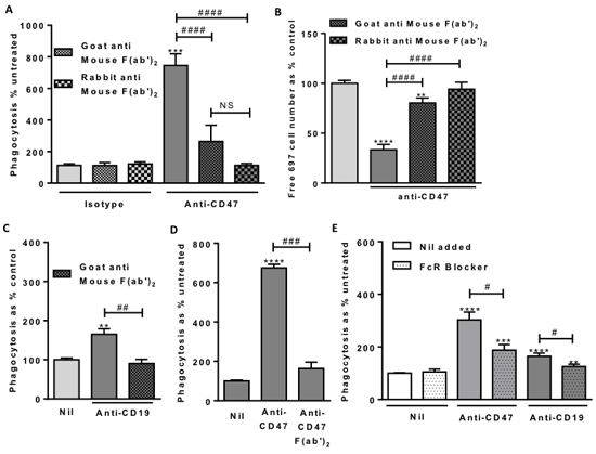Macrophage Fc Receptor binding is necessary for anti-CD47 and anti-CD19 induced phagocytosis.