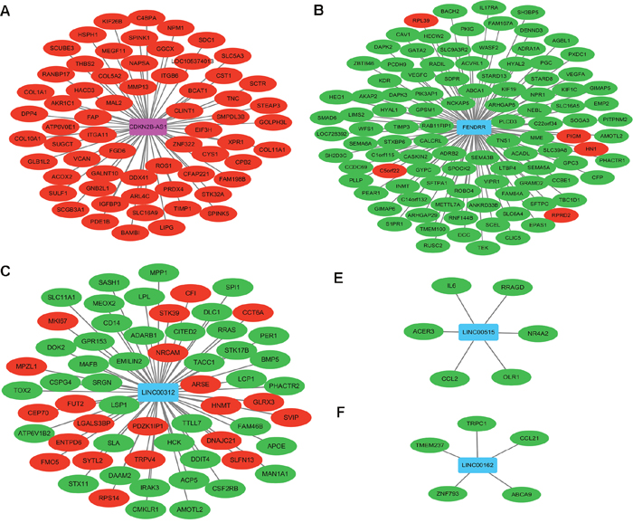 Co-expression network among DELs and DEMs in stage I lung adenocarcinoma.