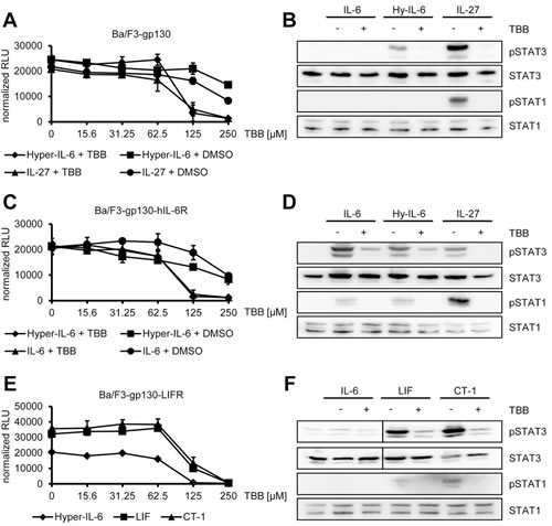 Fig 4: Inhibition of CK2 prevents cytokine-dependent proliferation of Ba/F3-gp130 cells.