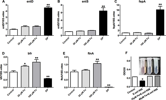 Effects of low iron concentration on the expression of bacterial iron metabolism-related genes and siderophores.