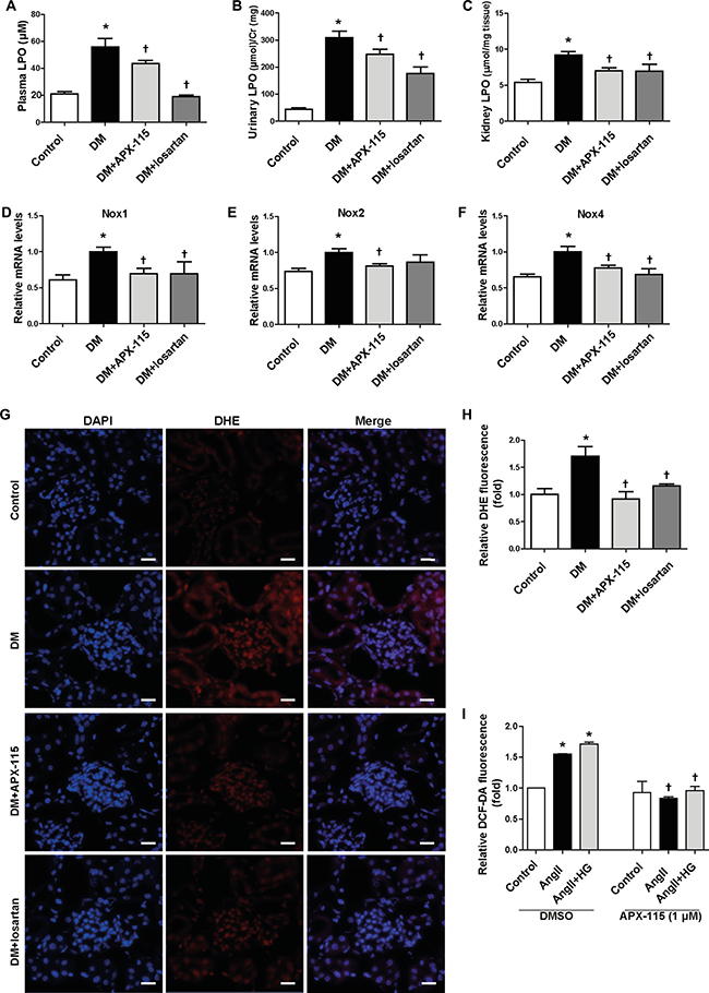 Effect of APX-115 on oxidative stress in STZ-induced diabetic mice.