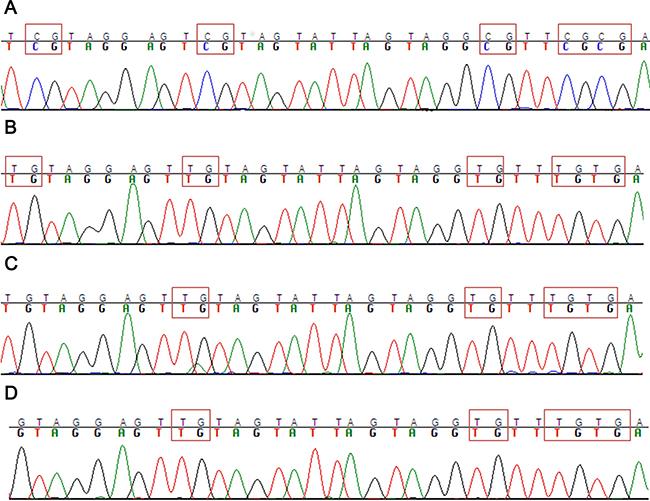 Methylation analysis of ASNS CpG.