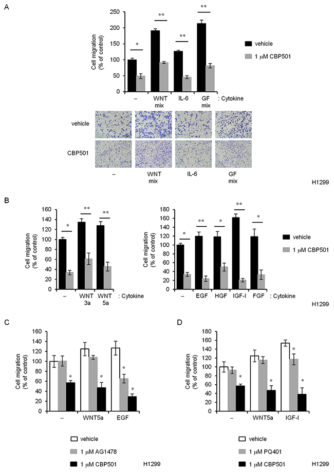 CBP501 prevents cell migration of H1299 cells by various EMT inducing factors.