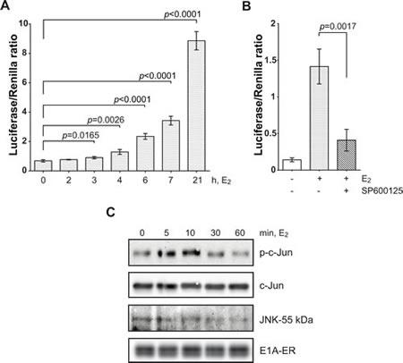 E1A-ER fusion protein activates c-Jun through JNK.