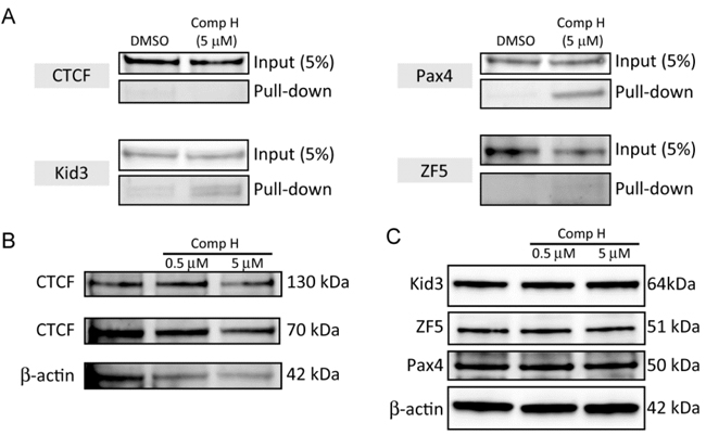 Compound H increased binding of Kid3 and Pax4 to the