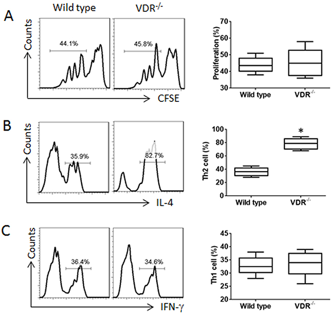 VDR-/- CD4+ T cells are prone to differentiating into Th2 cells.