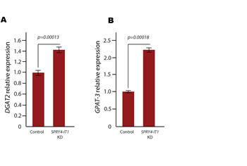 Expression of Diacylglycerol O-acyltransferase 2 and (DGAT2) Acyl-coA:glycerol-3-phosphate Acyltransferase 3 (GPAT3) Following SPRY4-IT1 Knockdown.