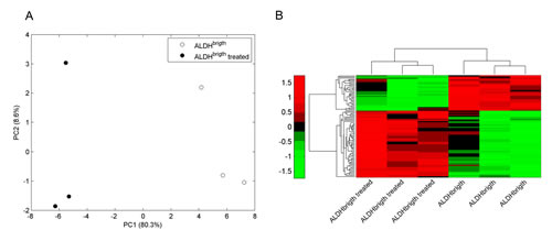 Metformin modulates microRNAs associated with metabolic functions in the ALDH