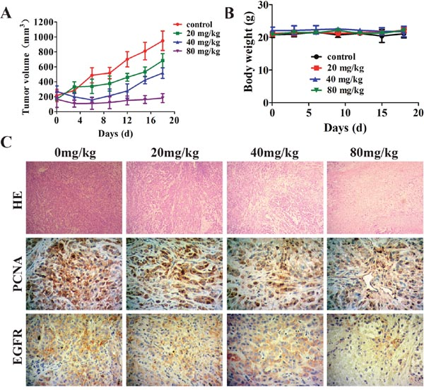 Effect of metapristone in non-small lung cancer xenograft model.