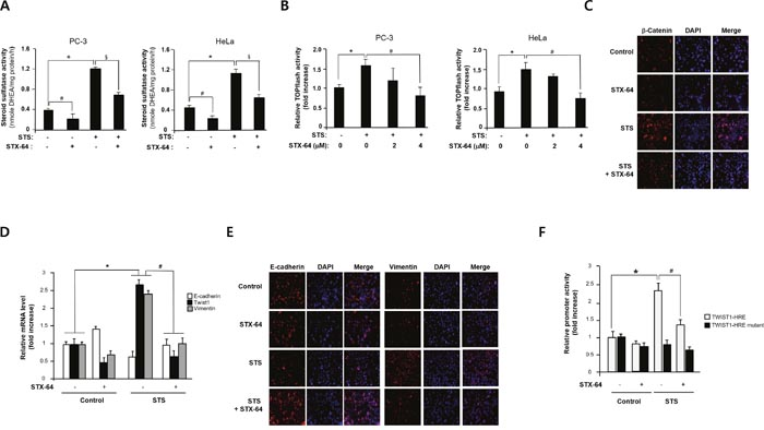 STX-64 suppresses STS-mediated β-catenin expression.