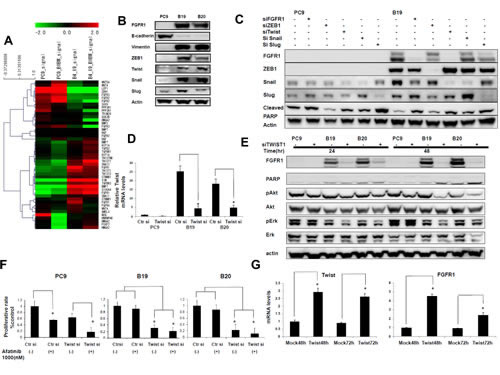 Twist knockdown specifically blocked FGFR1 expression and Akt phospholylation in afatinib resistant cell lines.