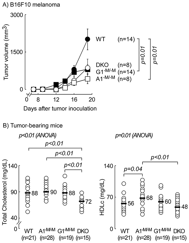 Mice with myeloid-specific deletion of ATP-binding cassette transporter ABCA1 are protected against melanoma- additive deletion in ABCG1 did not provide further protection.