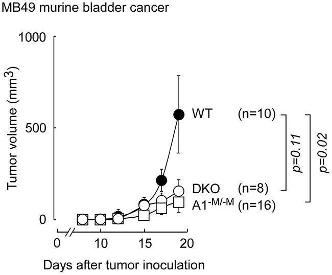 Mice with myeloid-specific deletion of ABCA1, are protected against MB49 bladder cancer on normal chow diet.