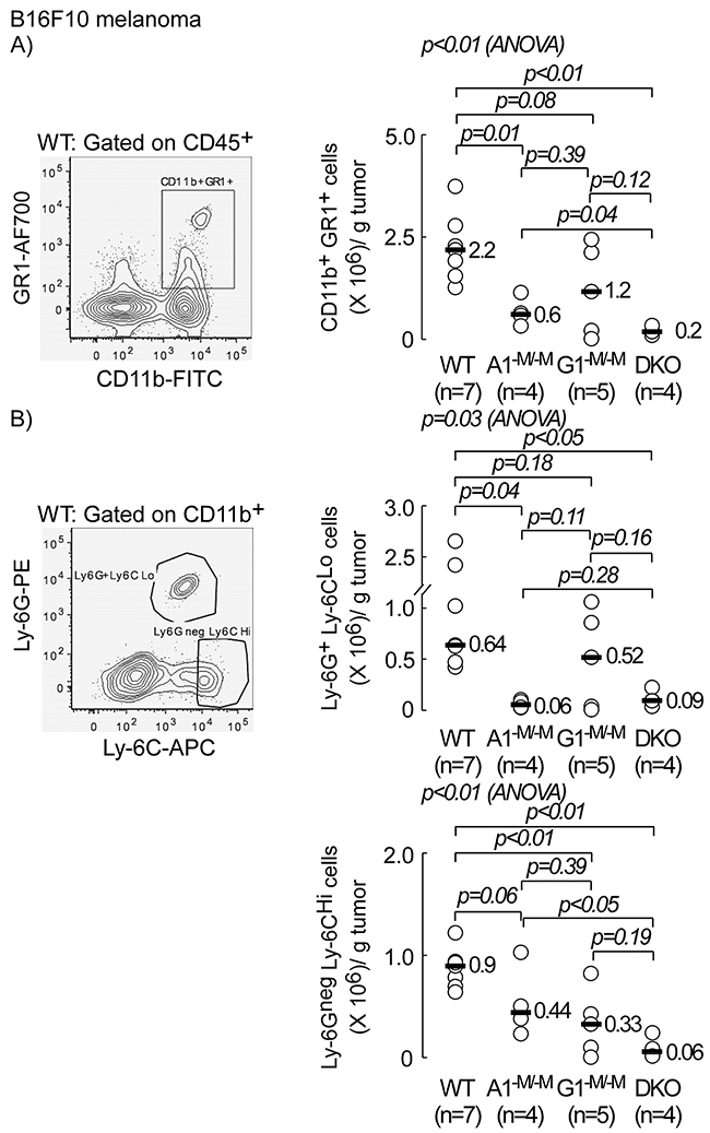 Myeloid-specific deletion of ABCA1 and ABCG1 transporters inhibits accumulation of myeloid derived suppressor cells (MDSCs) in tumor bed.