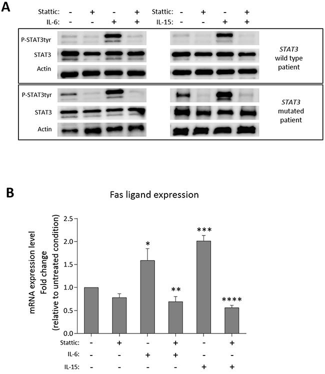 Fas ligand modulation after STAT3 activation/inhibition.