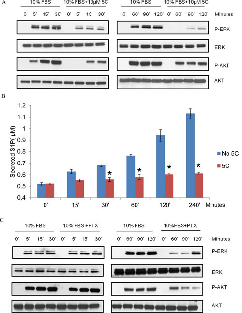SKI-5C inhibits the serum-dependent activation of ERK1/2 and AKT signalling and S1P export.