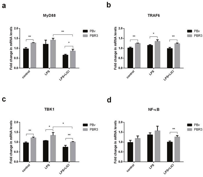 Effect of swine IRF3 overexpression on TLR4 signaling pathway components.