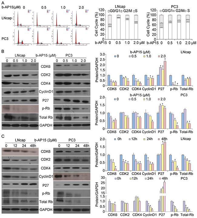 b-AP15 treatment induced G0/G1 cell cycle arrest in LNCaP and PC-3 cells.